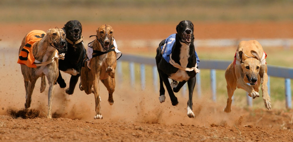 Countries Where Greyhound Racing Is Legal