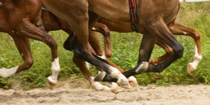 Horses_Racing_Dirt_Kicking_Up